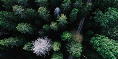 Svensk skog